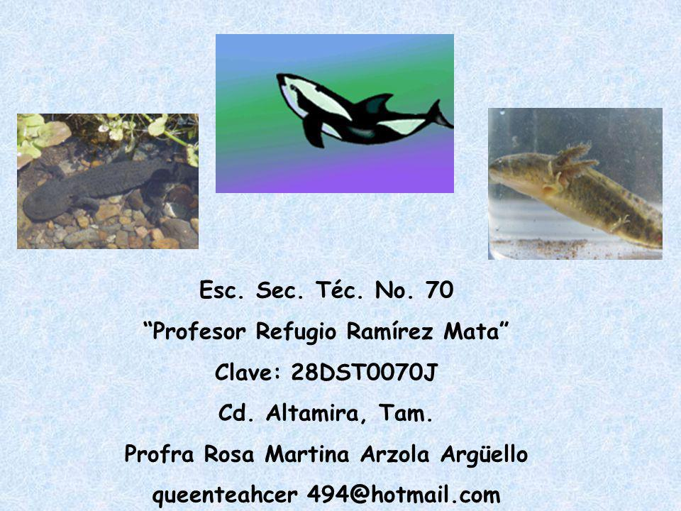 Profesor Refugio Ramírez Mata Clave: 28DST0070J Cd. Altamira, Tam.