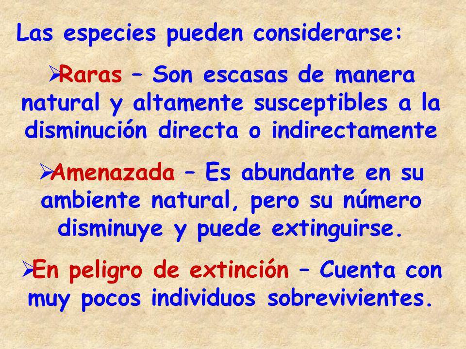 Las especies pueden considerarse: