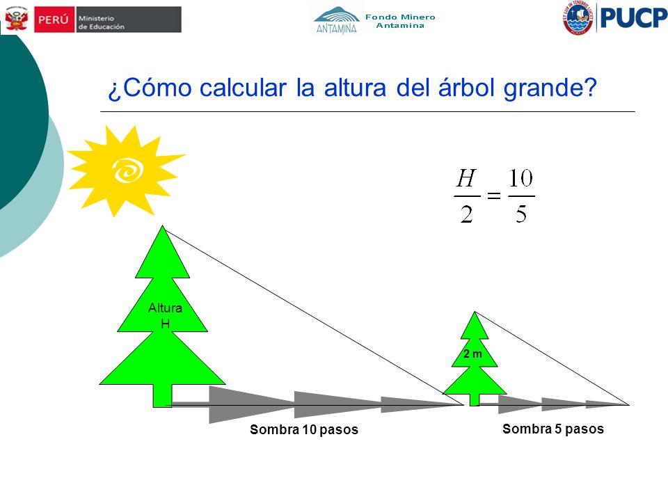 ¿Cómo calcular la altura del árbol grande