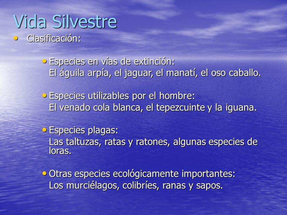 Vida Silvestre Clasificación: Especies en vías de extinción: