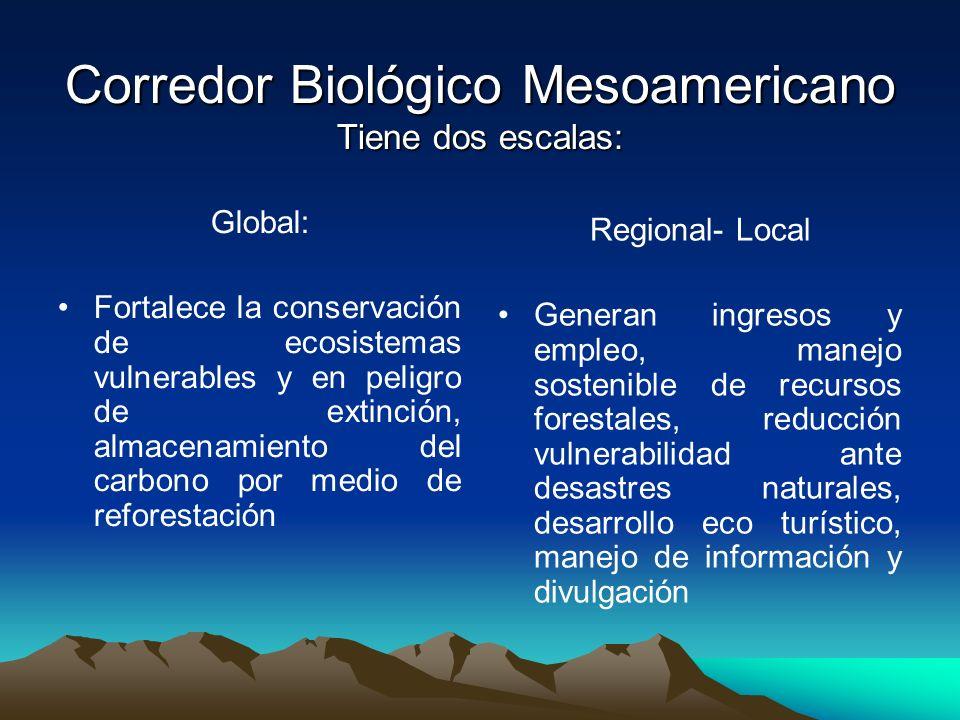 Corredor Biológico Mesoamericano Tiene dos escalas: