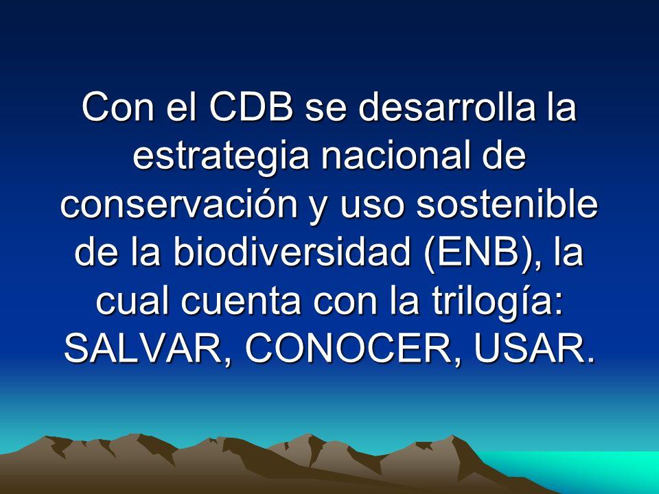 Con el CDB se desarrolla la estrategia nacional de conservación y uso sostenible de la biodiversidad (ENB), la cual cuenta con la trilogía: SALVAR, CONOCER, USAR.
