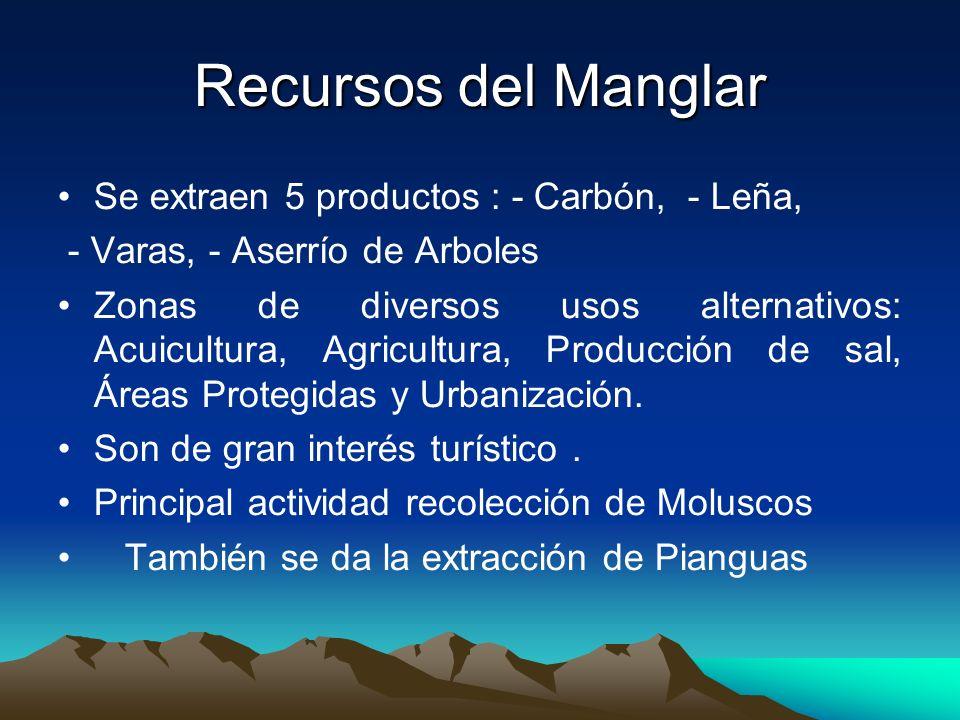 Recursos del Manglar Se extraen 5 productos : - Carbón, - Leña,