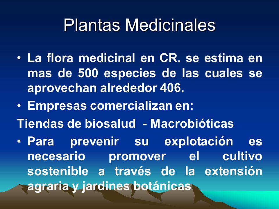 Plantas Medicinales La flora medicinal en CR. se estima en mas de 500 especies de las cuales se aprovechan alrededor 406.