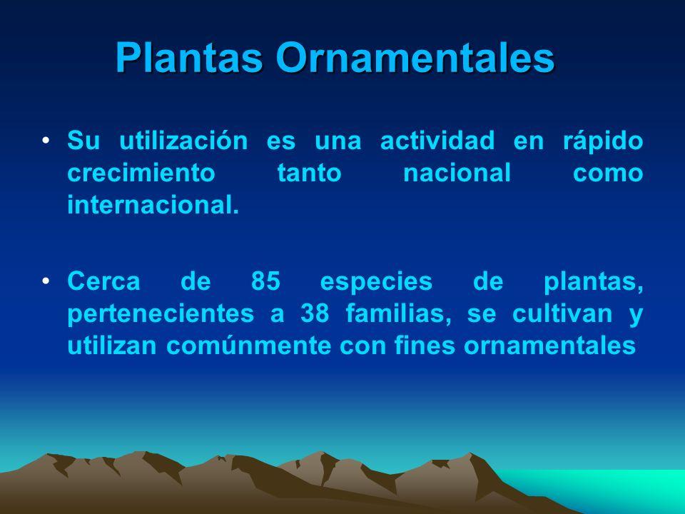 Plantas Ornamentales Su utilización es una actividad en rápido crecimiento tanto nacional como internacional.
