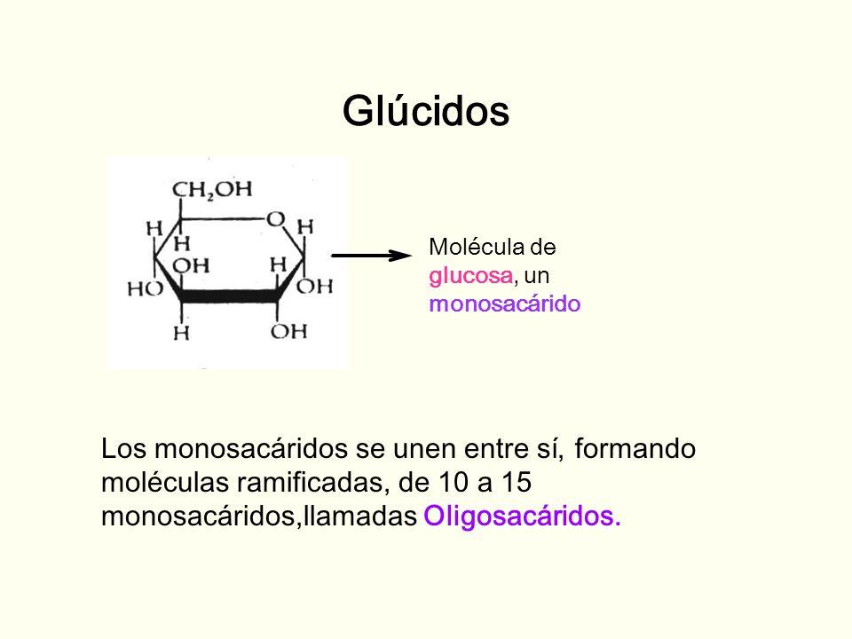 GlúcidosMolécula de. glucosa, un monosacárido.