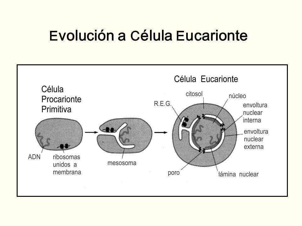 Evolución a Célula Eucarionte