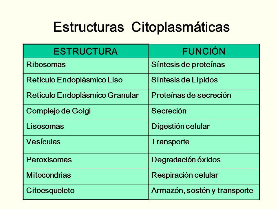 Estructuras Citoplasmáticas