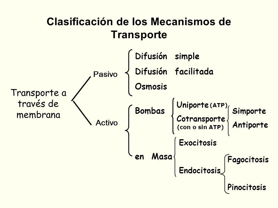 Clasificación de los Mecanismos de Transporte