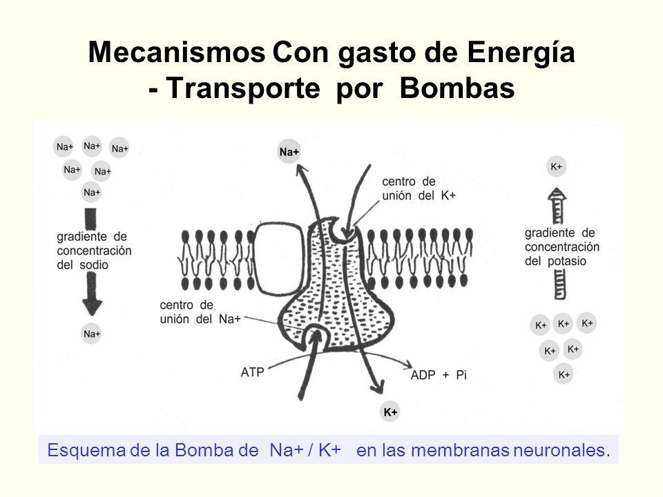 Mecanismos Con gasto de Energía - Transporte por Bombas