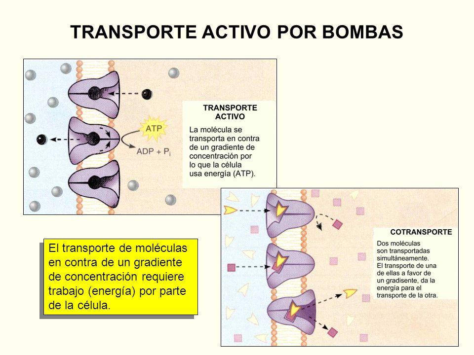 TRANSPORTE ACTIVO POR BOMBAS