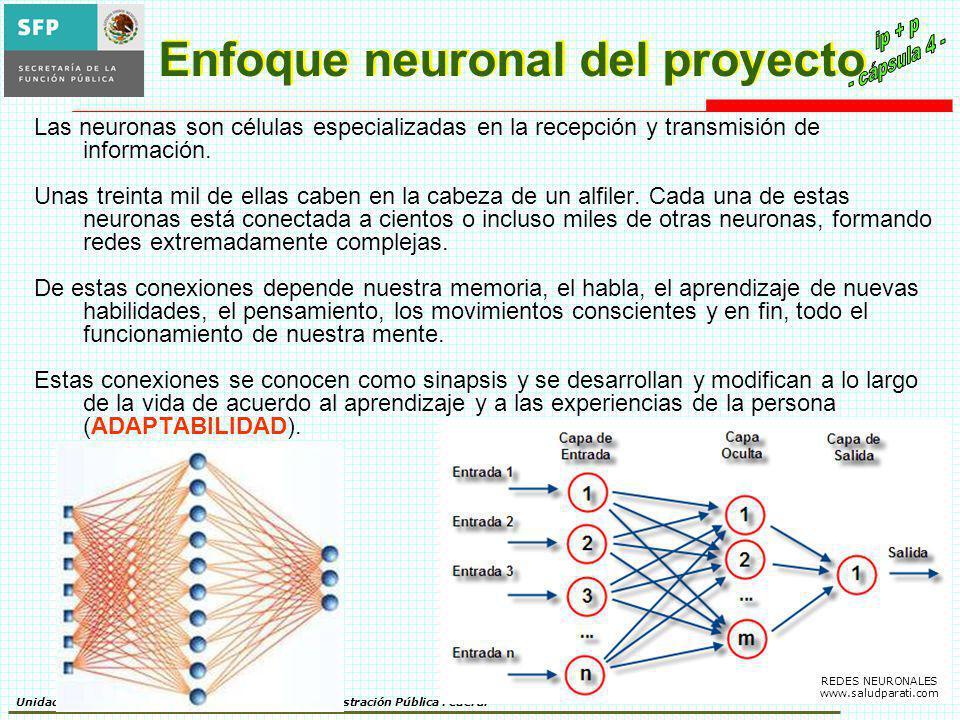 Enfoque neuronal del proyecto