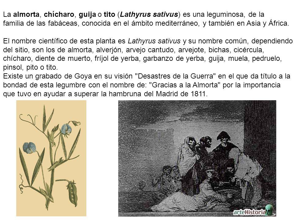 La almorta, chícharo, guija o tito (Lathyrus sativus) es una leguminosa, de la