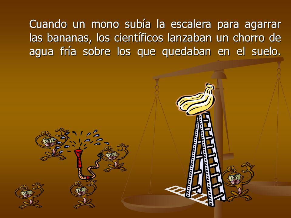 Cuando un mono subía la escalera para agarrar las bananas, los científicos lanzaban un chorro de agua fría sobre los que quedaban en el suelo.
