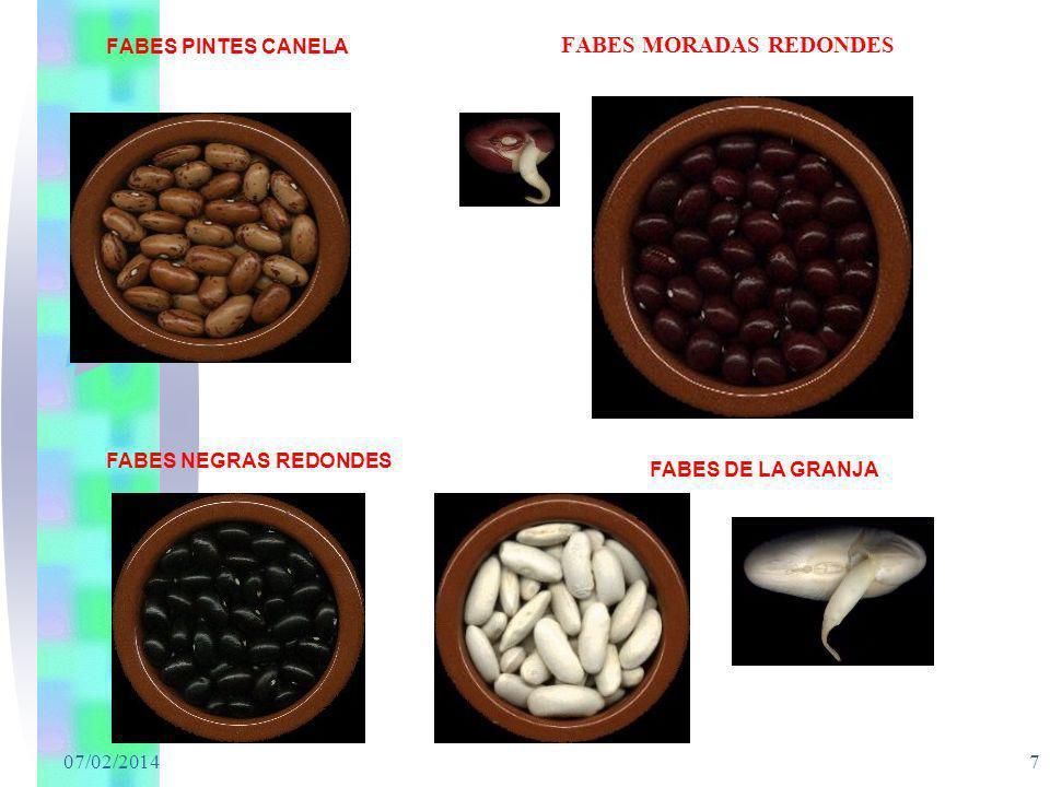FABES MORADAS REDONDES