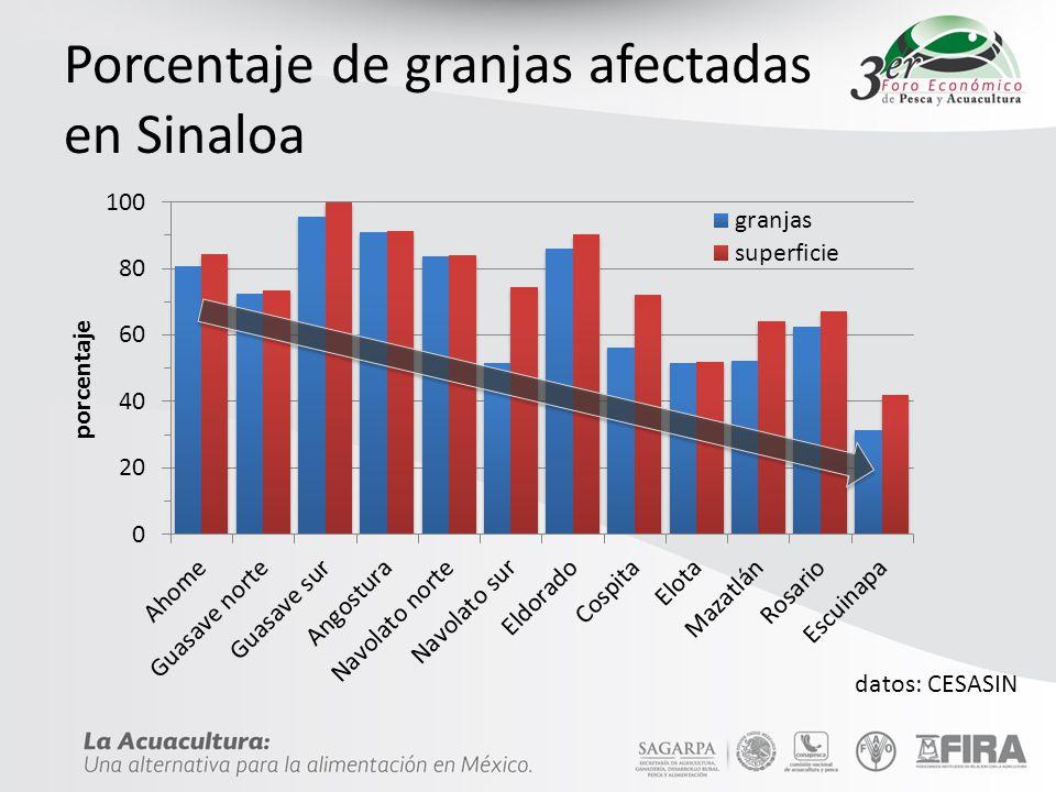 Porcentaje de granjas afectadas en Sinaloa
