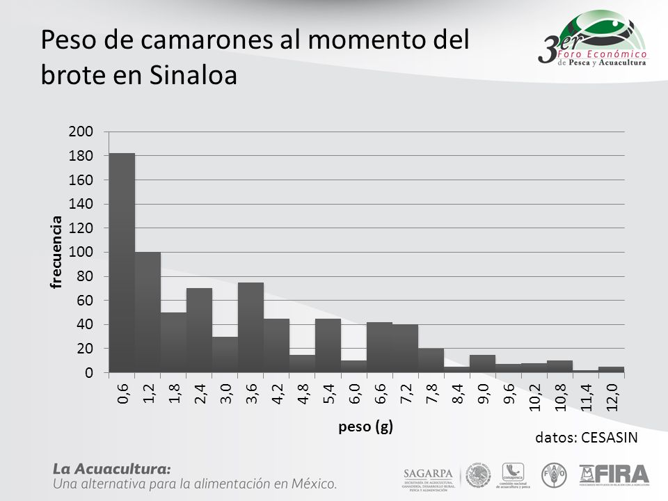 Peso de camarones al momento del brote en Sinaloa