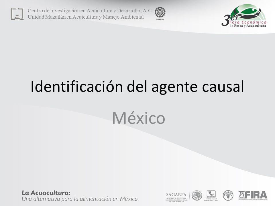 Identificación del agente causal
