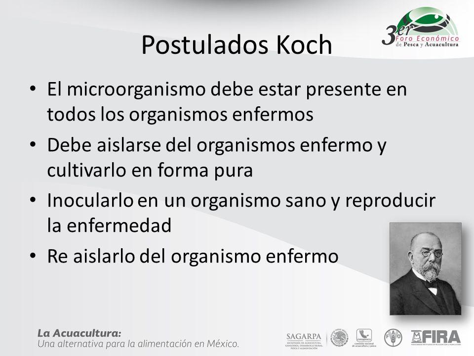 Postulados Koch El microorganismo debe estar presente en todos los organismos enfermos.