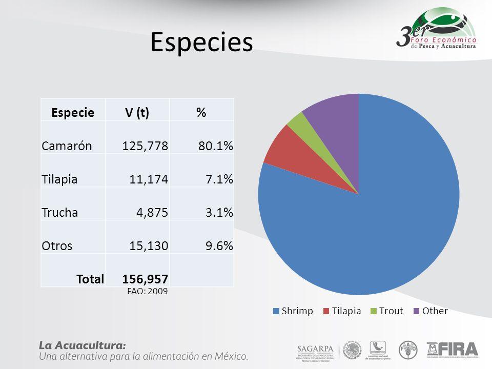 Especies Especie V (t) % Camarón 125,778 80.1% Tilapia 11,174 7.1%
