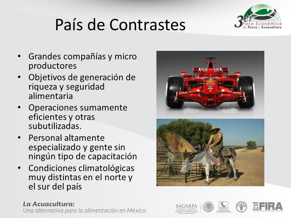 País de Contrastes Grandes compañías y micro productores