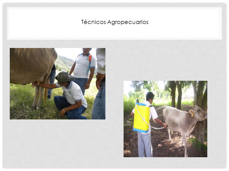 Técnicos Agropecuarios