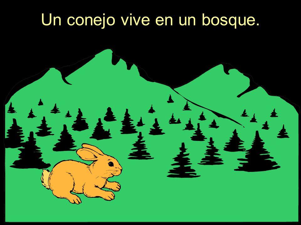 Un conejo vive en un bosque.