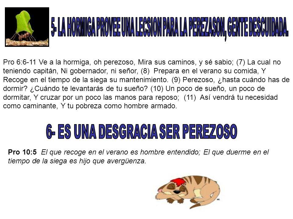 5- LA HORMIGA PROVEE UNA LECSION PARA LA PEREZASON, GENTE DESCUIDADA.