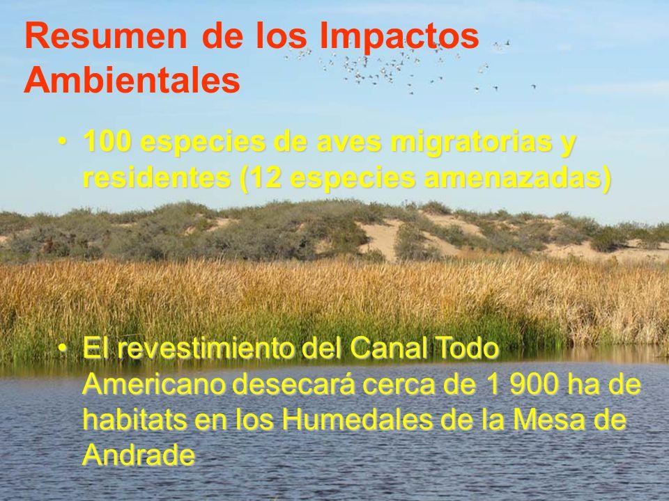 Resumen de los Impactos Ambientales