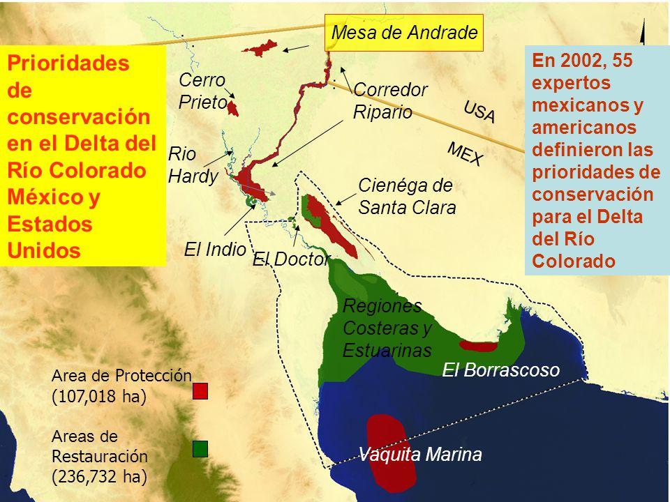 Prioridades de conservación en el Delta del Río Colorado