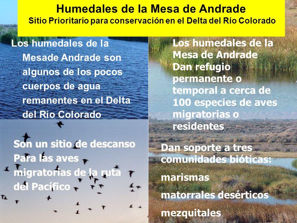 Humedales de la Mesa de Andrade Sitio Prioritario para conservación en el Delta del Río Colorado