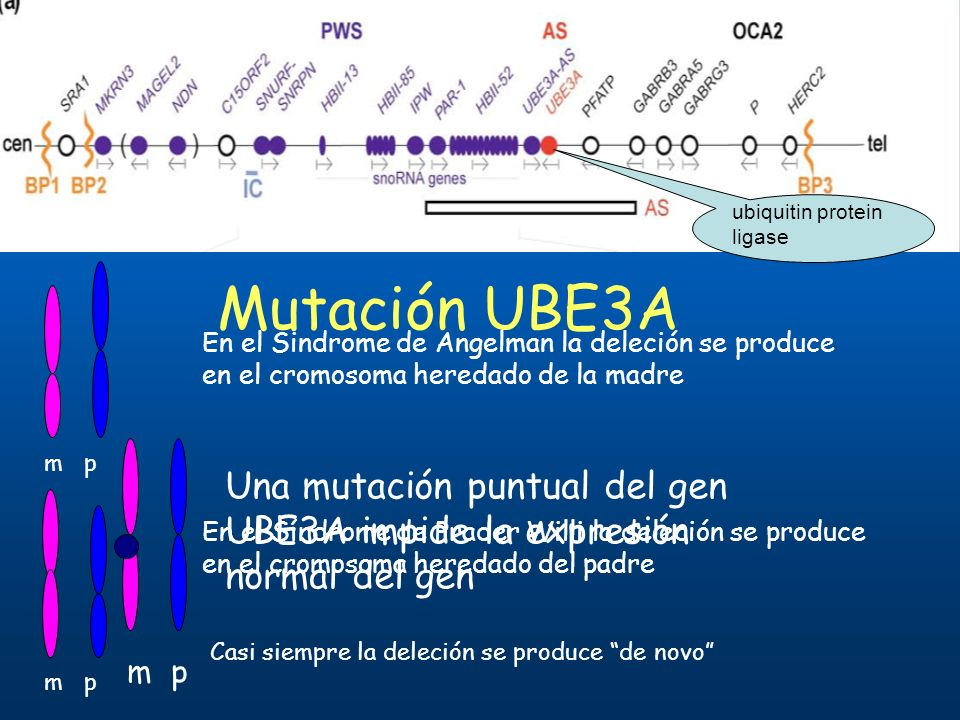 Mutación UBE3A Una mutación puntual del gen