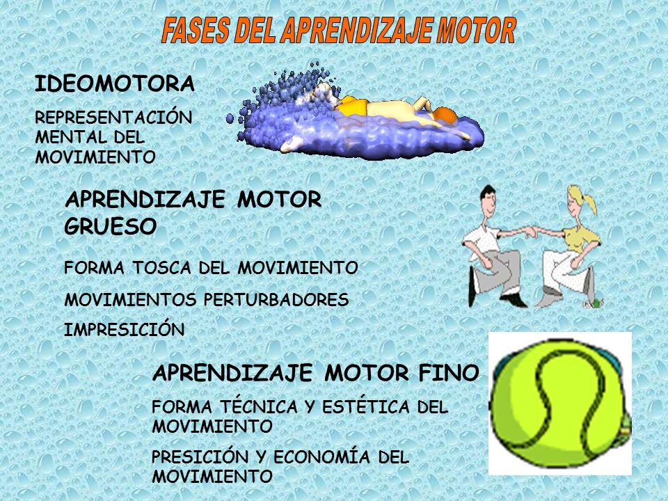 FASES DEL APRENDIZAJE MOTOR
