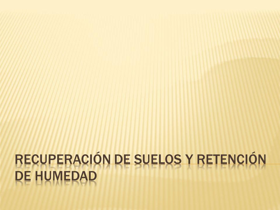RECUPERACIÓN DE SUELOS Y RETENCIÓN DE HUMEDAD