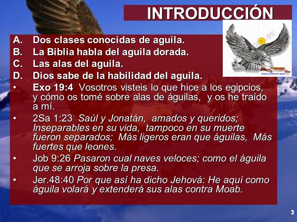 INTRODUCCIÓN Dos clases conocidas de aguila.