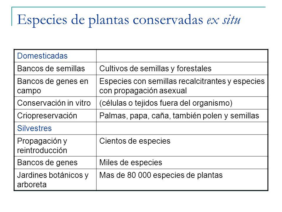 Especies de plantas conservadas ex situ