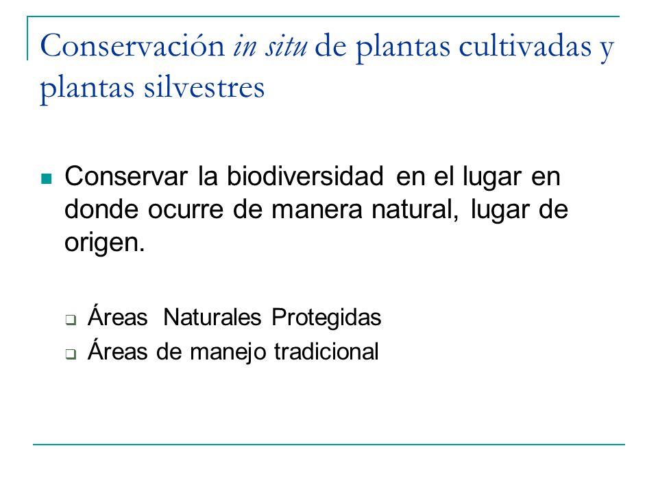 Conservación in situ de plantas cultivadas y plantas silvestres