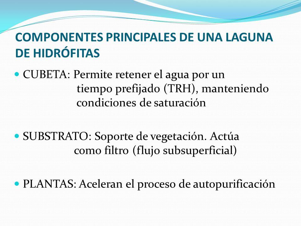 COMPONENTES PRINCIPALES DE UNA LAGUNA DE HIDRÓFITAS