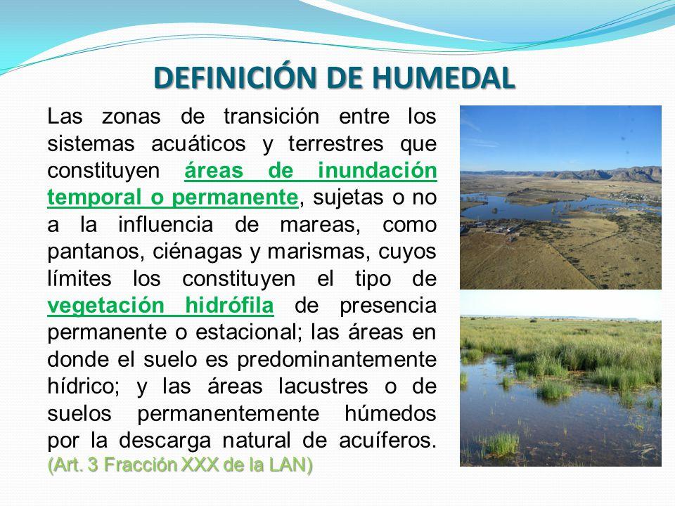 DEFINICIÓN DE HUMEDAL