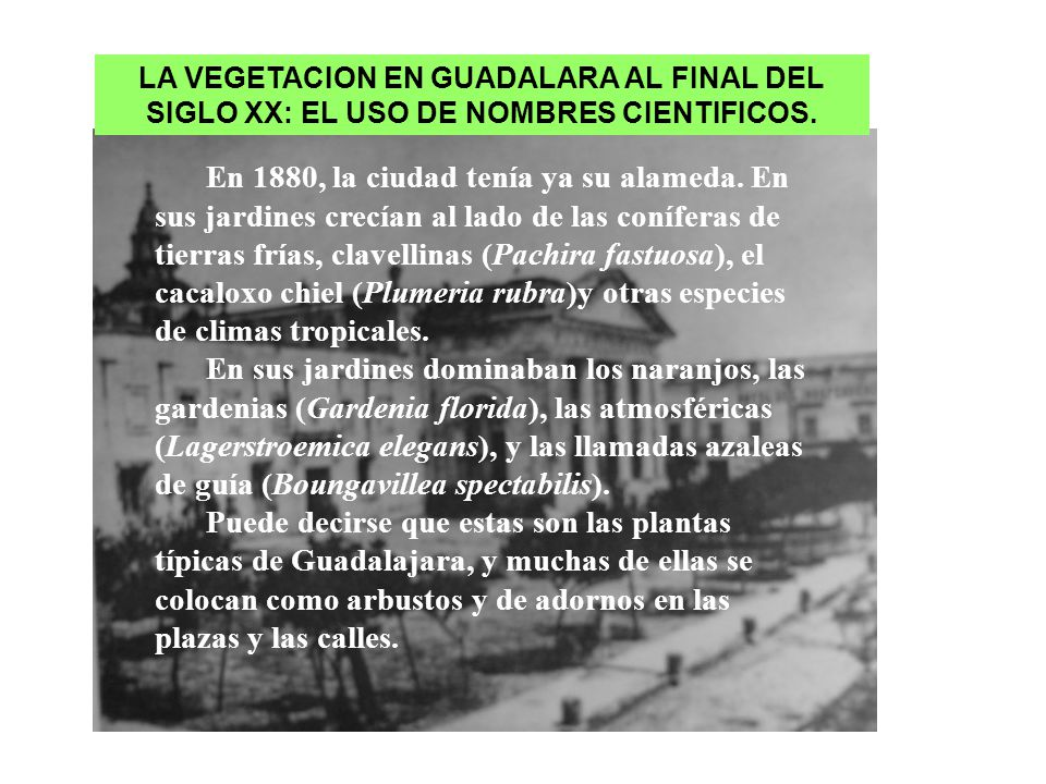 LA VEGETACION EN GUADALARA AL FINAL DEL SIGLO XX: EL USO DE NOMBRES CIENTIFICOS.