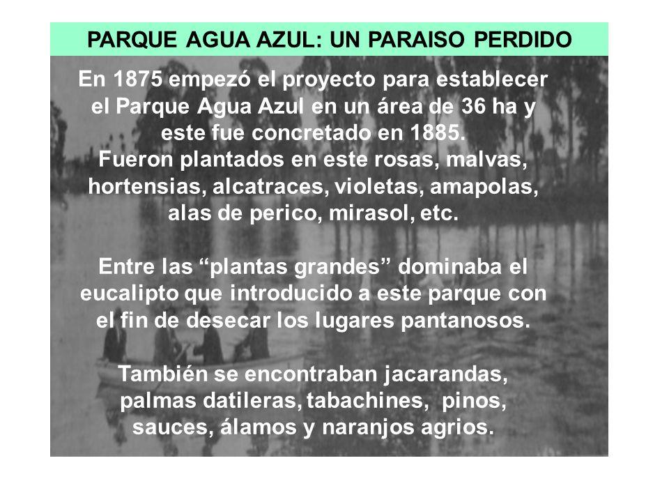 PARQUE AGUA AZUL: UN PARAISO PERDIDO