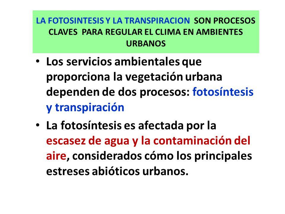 LA FOTOSINTESIS Y LA TRANSPIRACION SON PROCESOS CLAVES PARA REGULAR EL CLIMA EN AMBIENTES URBANOS