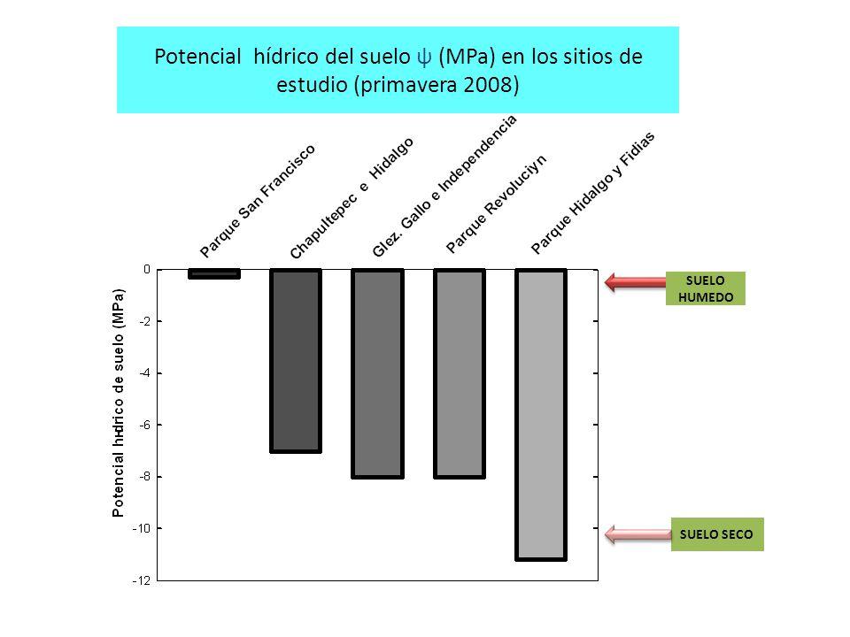 Potencial hídrico del suelo ψ (MPa) en los sitios de estudio (primavera 2008)