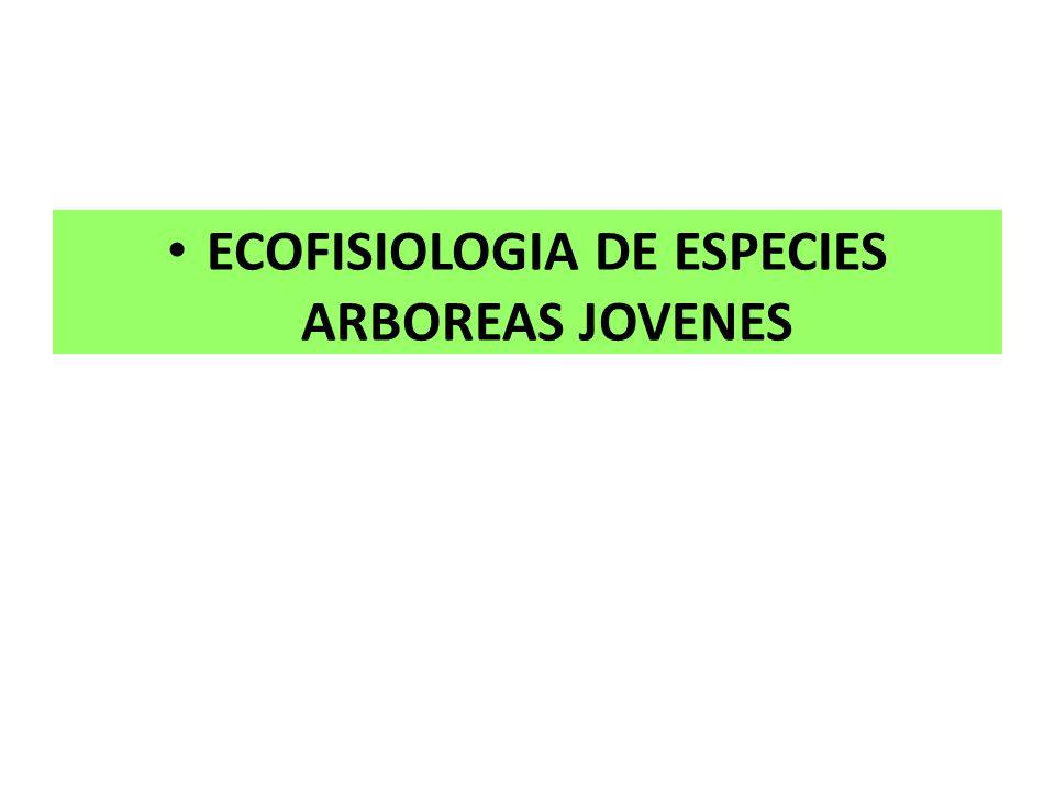 ECOFISIOLOGIA DE ESPECIES ARBOREAS JOVENES
