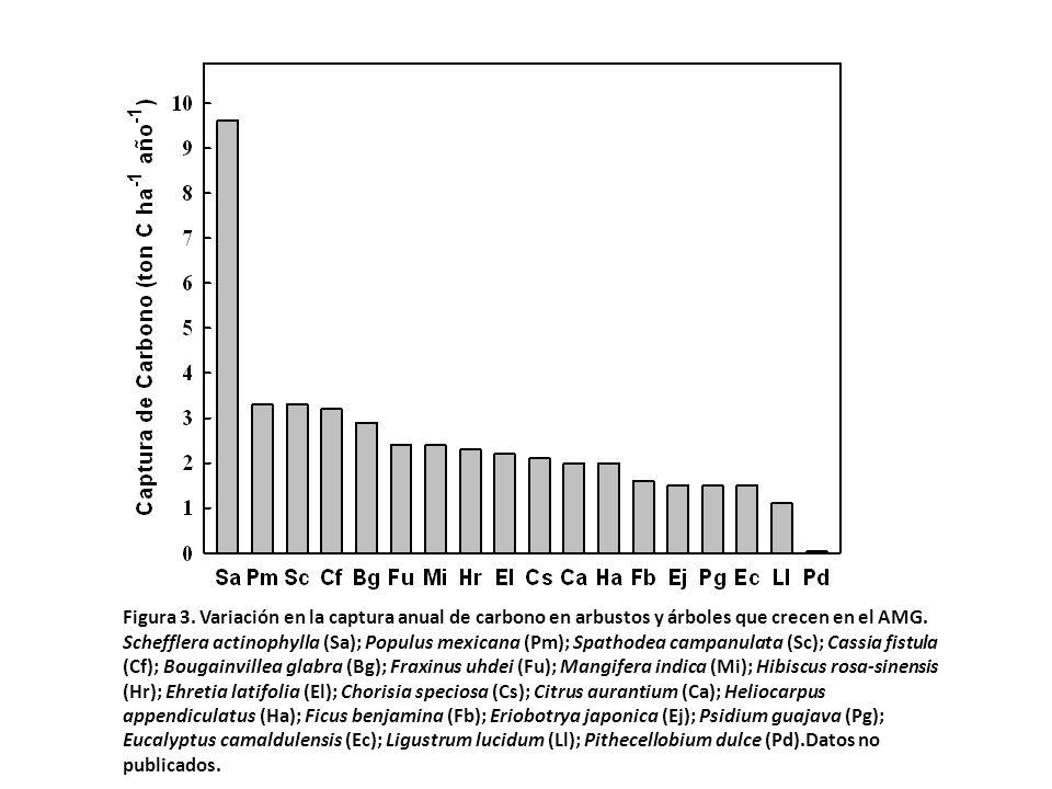 Figura 3. Variación en la captura anual de carbono en arbustos y árboles que crecen en el AMG.
