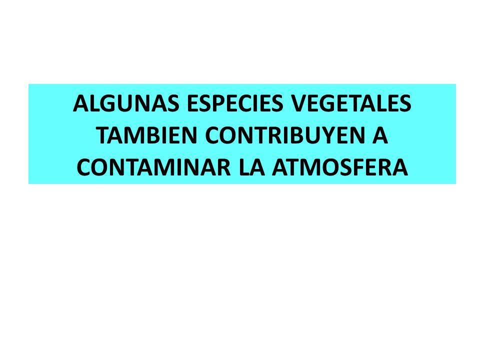 ALGUNAS ESPECIES VEGETALES TAMBIEN CONTRIBUYEN A CONTAMINAR LA ATMOSFERA