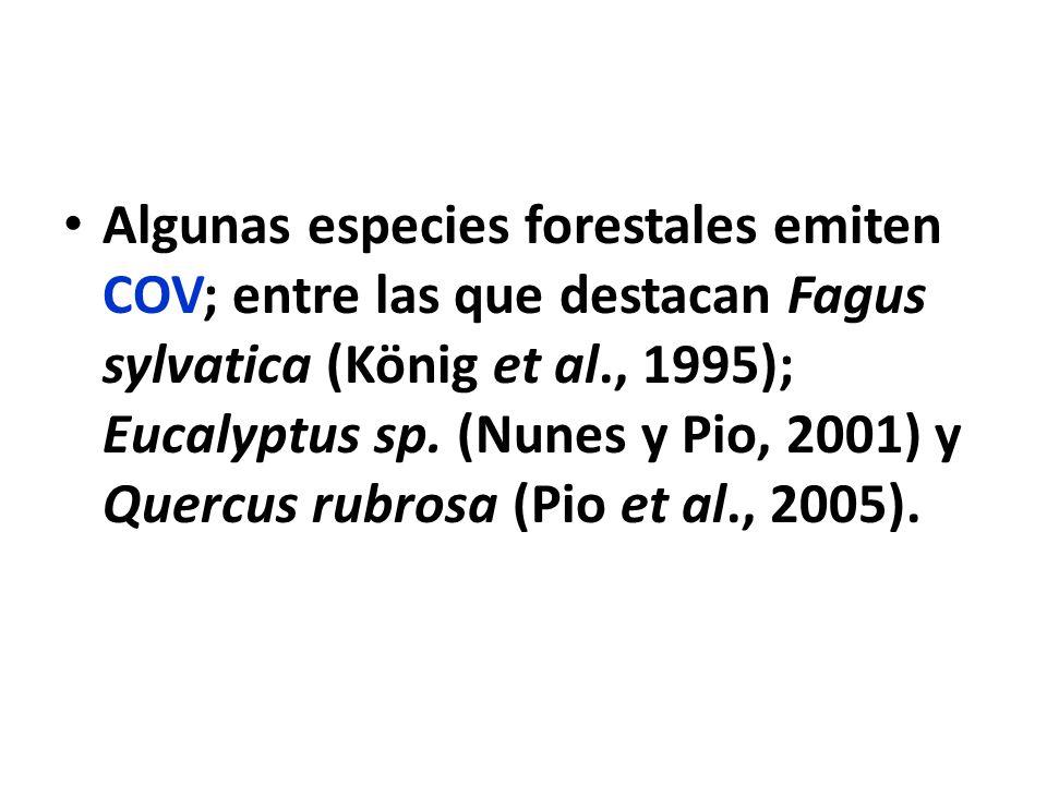 Algunas especies forestales emiten COV; entre las que destacan Fagus sylvatica (König et al., 1995); Eucalyptus sp.