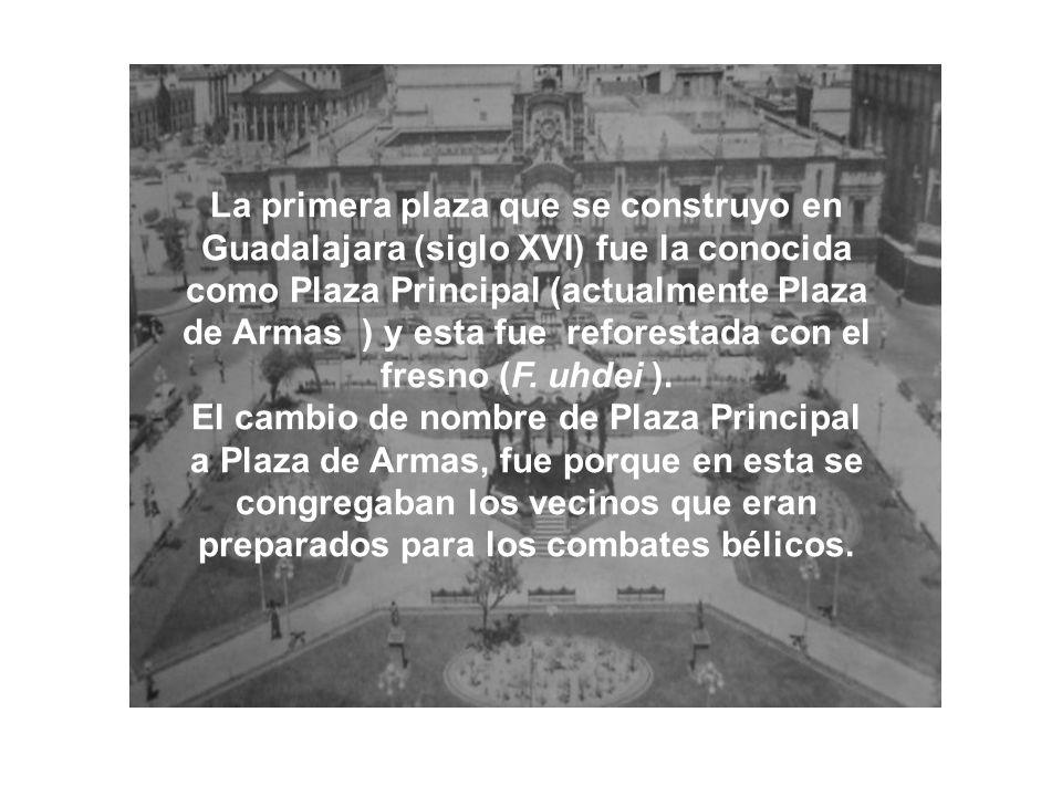 La primera plaza que se construyo en Guadalajara (siglo XVI) fue la conocida como Plaza Principal (actualmente Plaza de Armas ) y esta fue reforestada con el fresno (F. uhdei ).