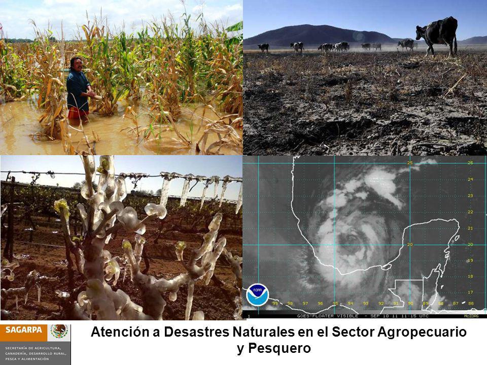 Atención a Desastres Naturales en el Sector Agropecuario y Pesquero
