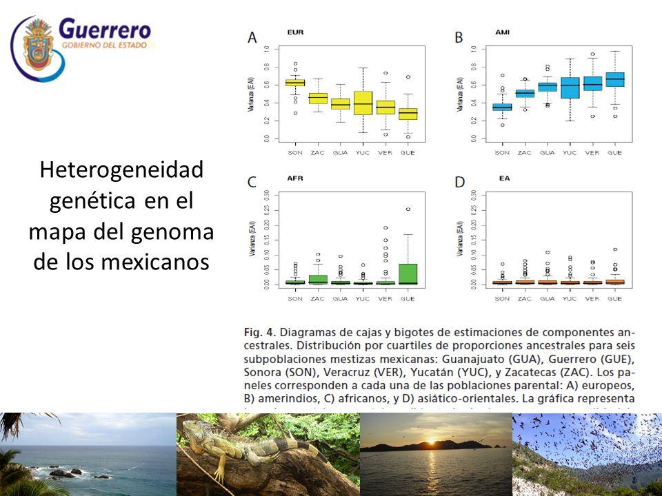 Heterogeneidad genética en el mapa del genoma de los mexicanos